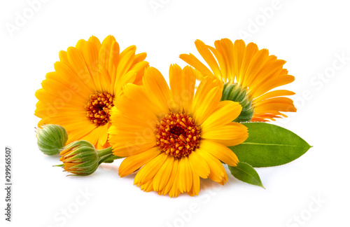 Calendula. Flowers with leaves isolated on white #299565507