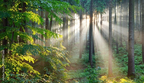 Deurstickers Pistache Sun rays in a fog in a misty morning green forest. Osnabruck, germany