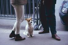 散歩の途中で立ち話が終わるのを待つ犬