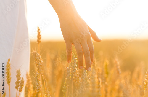 Canvas Prints Culture harvesting, nature, agriculture and prosperity concept - young woman on cereal field touching ripe wheat spickelets by her hand