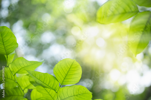 Foto auf Gartenposter Lime grun Close up of nature view green leaf on blurred greenery background under sunlight with bokeh and copy space using as background natural plants landscape, ecology wallpaper concept.