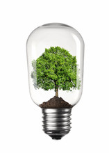 Light Bulb With Green Tree Ins...