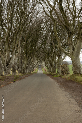 The Dark hedges entangled Beech trees in winter, filming location for HBO's Game Wallpaper Mural