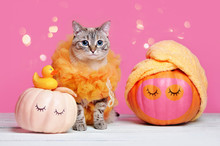 Grooming Halloween With A Cat Wearing Loofah Costume And Pumpkins With Towel Turban
