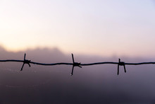 Barbed Wire With Drops Of Dew On A Background Of The Sky Before Dawn.