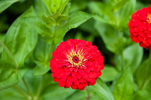Red Flower On The Green Background