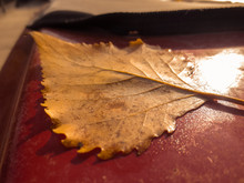 Yellow Autumn Leaf On A Red We...