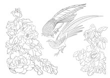 Peony Tree Branch With Flowers With Pheasants In The Style Of Chinese Painting On Silk. Coloring Page For The Adult Coloring Book. Outline Vector Illustration.