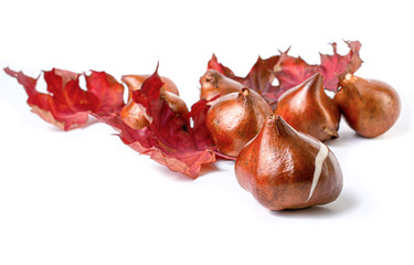 Tulip bulbs on a white background.