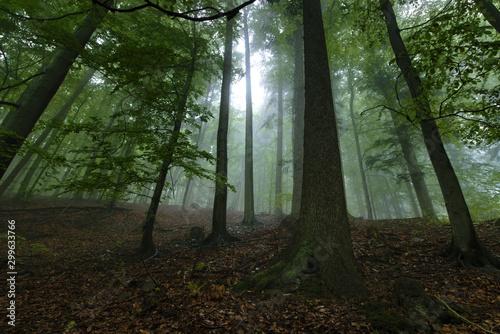 las-w-deszczowy-mglisty-dzien