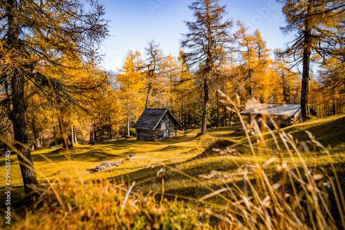 Fototapeta Autumn 2019