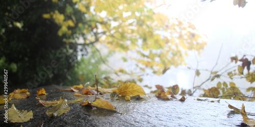 Foglie gialle in una giornata d'autunno Slika na platnu