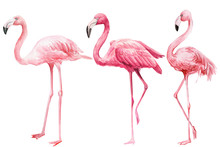 Set Of  Pink Flamingo On An Is...