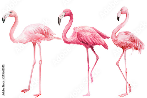 set of  pink flamingo on an isolated white background, watercolor illustration