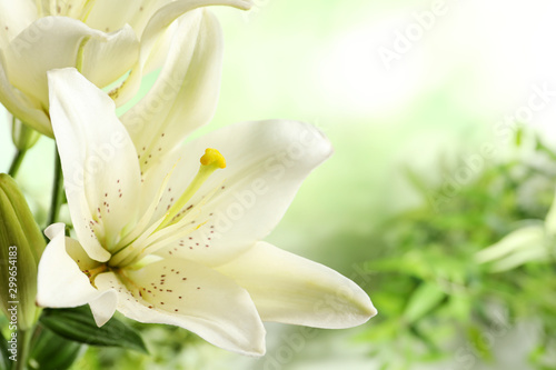 Poster de jardin Fleur Beautiful lilies on blurred background, closeup view. Space for text