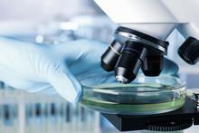 Scientist Putting Petri Dish W...