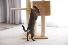 Cute Tabby Cat And Pet Tree At Home