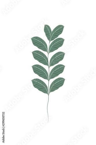 tropikalne-liscie-i-liscie-ilustracja
