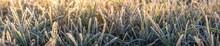 Panorama Von Gras An Einem Fro...