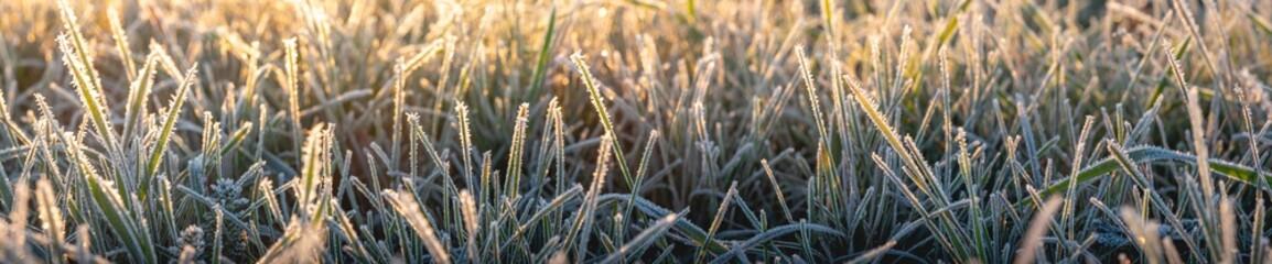 Panorama von Gras an einem frostigen Morgen im Herbst