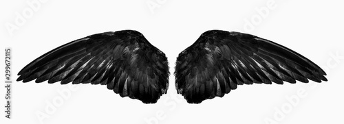 Fényképezés wings isolated on a white background