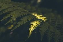 Beautiful Fern Plant Under The...