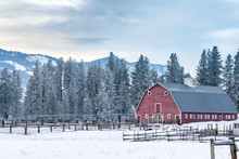 Old Red Barn At The Edge Of An Evergreen Forest - Methow Valley, Washington, USA (Winter)