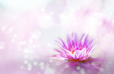 Fototapeta Kwiaty - Soft pink lotus on pond with soft sunlight blur bokeh reflection on water background, Lily water flower on the lake