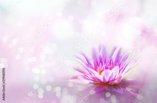 Canvas Prints Floral Soft pink lotus on pond with soft sunlight blur bokeh reflection on water background, Lily water flower on the lake
