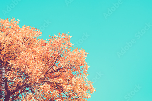 Poster Vert corail Autumn branches with beech leaves decorate background copy space Place for text Hello autumn, september, october, november, nature concept Rustic style