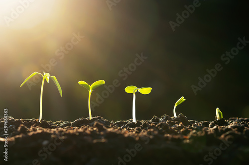 Foto auf Leinwand Pflanzen plant growth in farm with sunset background. agriculture seeding growing step concept