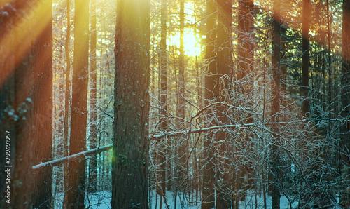 Foto auf Gartenposter Khaki winter landscape