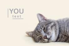 Portrait Of Grey Cat Sleeping On Towel