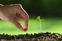 Person 's Hand Planting Seed...