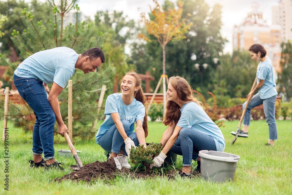 Fototapeta Volunteering. Young people volunteers outdoors planting trees digging ground talking cheerful