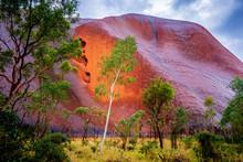 Ghost Gum, Mutitjulu, Uluru-Ka...