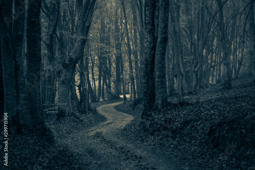 Papiers peints Route dans la forêt A pathway between trees leading into a dark and misty forest