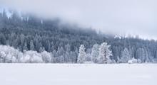 Winter Wonderland Forest: Evergreen Trees On Snow-covered Hillside - Washington, USA