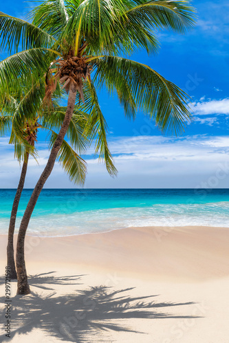 palm-trees-on-tropical-beach-and-blue-sea-in-caribbean-island-summer-vacation-and-tropical-beach-concept
