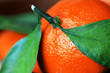 Bright orange tangerines with leaves on a wooden background close-up