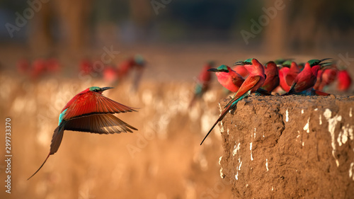Photo  Red birds