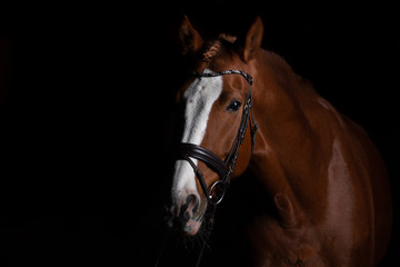 Horse head photographed in front of a black background and slit from one side..