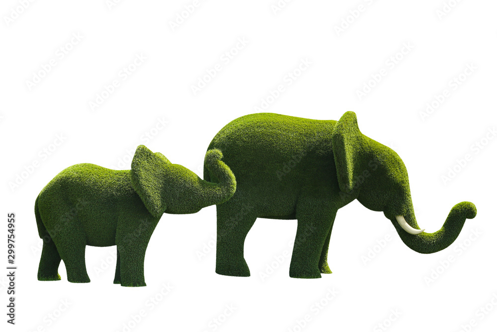 Fototapety, obrazy: Beautiful elephant shaped topiaries isolated on white. Landscape gardening