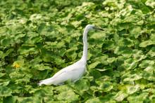 White Bird In Rain Forest Water Plants