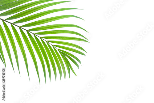 Tuinposter Palm boom leaves of coconut isolated on white background