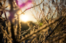 Sunlight Breaking Through The Winter, Frosty Branches Of Trees, Without Leaves.Selective Focus.