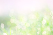 Green White Abstract Blur Colorful Leaves Flower Tree In Garden