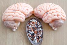 Variety Of Rice And Human Brain Anatomy Model