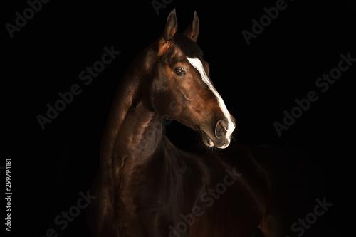 Fotomural  Portrait horse