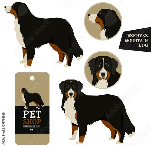 Dog Breeds set Vector illustration Bernese Mountain Dog Isolated objects